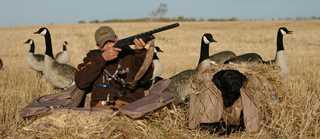 Gooseshooting
